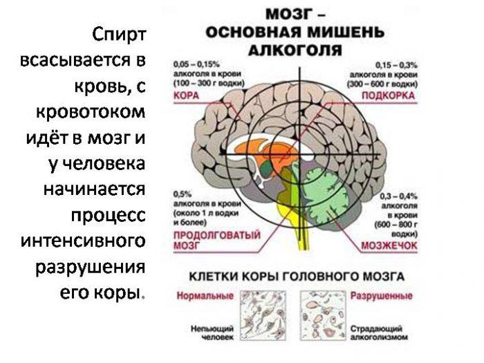 struktura-mozga-pri-sekse