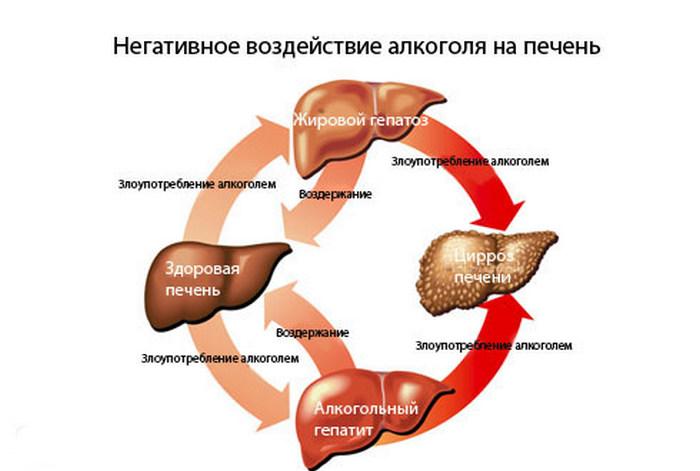 Влияние алкоголя на органы и что страдает в первую очередь