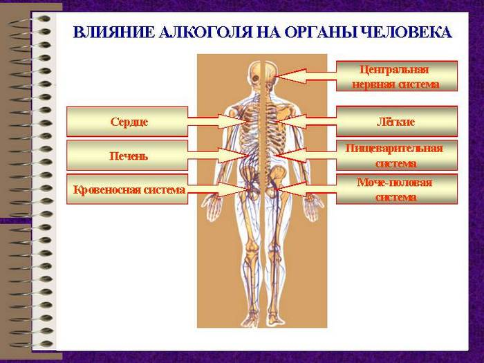 влияние пива на органы человека