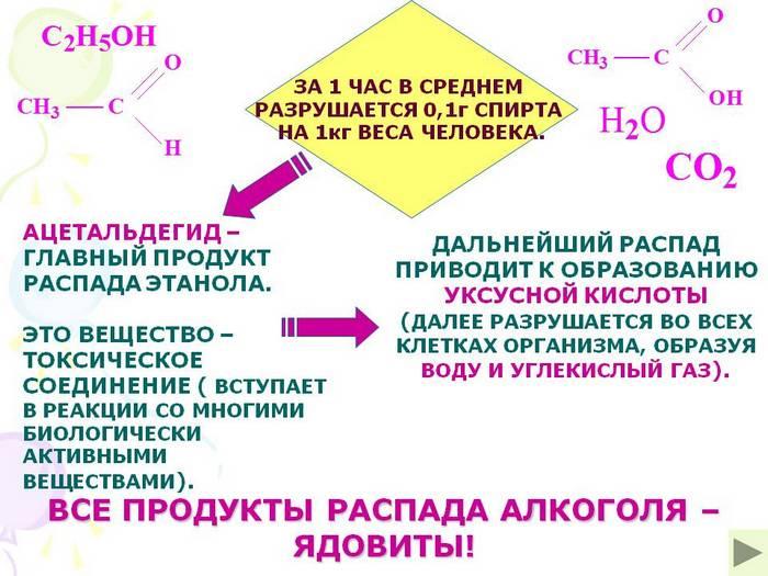 механизм выведения спиртного