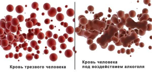 всасывание молекул спирта в кровь
