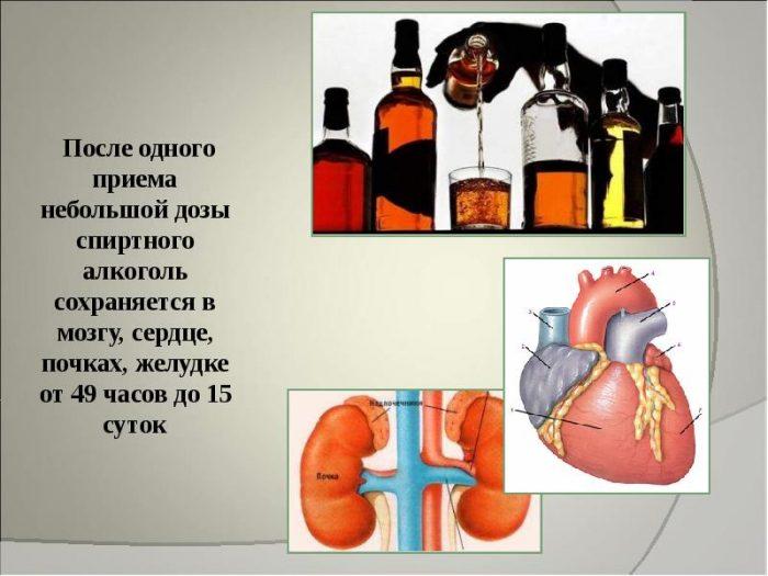 влияние спиртных напитков на организм здорового человека