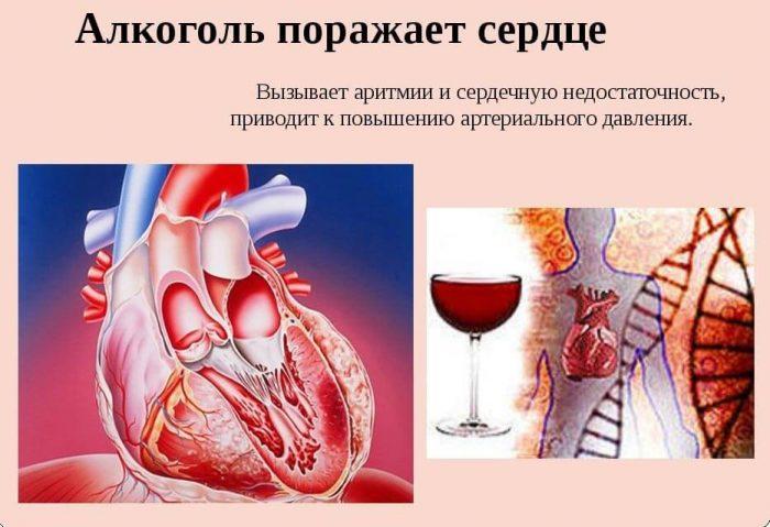 алкоголь поражает сердечную мышцу