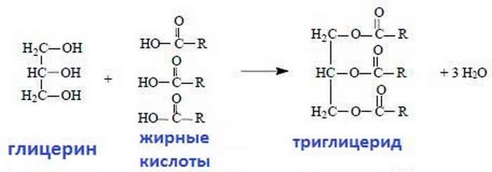 среднецепочные триглицериды