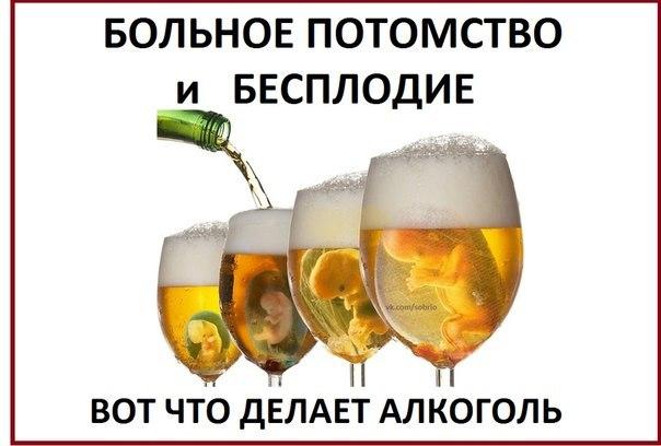 как алкоголь влияет на яйцеклетки