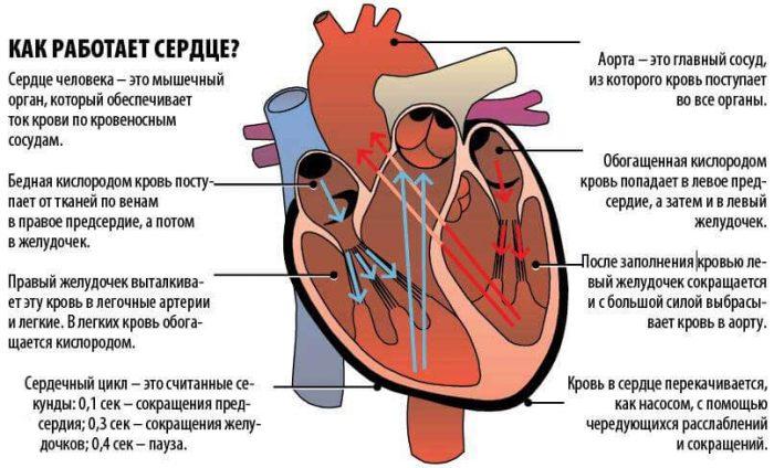 кровяное давление у человека