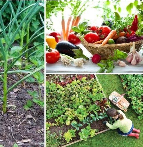 Хитрости огородников