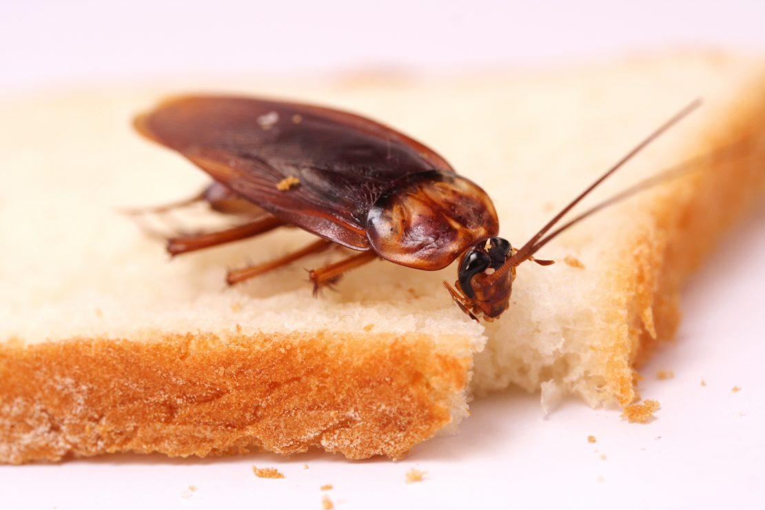 Почему исчезли тараканы и куда они ушли