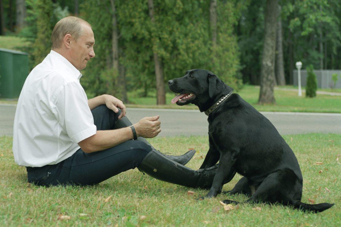 налог на домашних животных